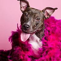 Adopt A Pet :: Betty Rue - Baton Rouge, LA
