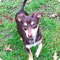 Adopt A Pet :: Puppy Alert!  Clooney - North Bend, WA
