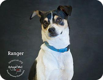 Rat Terrier Mix Dog for adoption in Phoenix, Arizona - Ranger
