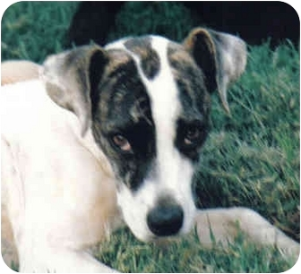 Terrier (Unknown Type, Small) Mix Dog for adoption in Sheridan, Arkansas - Patty