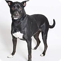 Adopt A Pet :: FALKOR - Wilmington, NC