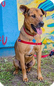 German Shepherd Dog Mix Dog for adoption in Houston, Texas - Myles