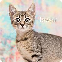 Adopt A Pet :: Lowen - Orlando, FL