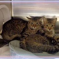 Adopt A Pet :: MILLY - Marietta, GA