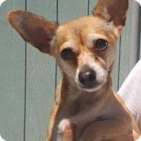 Adopt A Pet :: Rico - Key Largo, FL