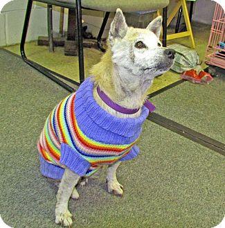 Shiba Inu Mix Dog for adoption in North Kingstown, Rhode Island - SKYE