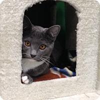 Adopt A Pet :: Dee - Byron Center, MI