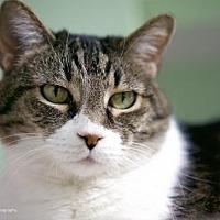 Adopt A Pet :: Peebles - Tucson, AZ