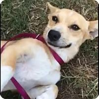 Adopt A Pet :: Cornucopia - Flower Mound, TX