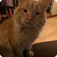 Adopt A Pet :: Mr Fuzzy pants - Roseburg, OR