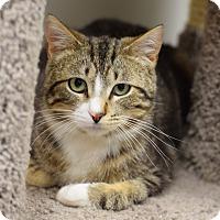 Adopt A Pet :: Elvis - Chaska, MN