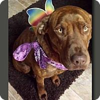 Adopt A Pet :: Margaret Ann - Wakefield, RI