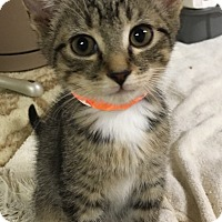 Adopt A Pet :: Twitch - Monroe, GA