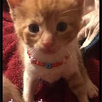Adopt A Pet :: Jaq Jaq - (216) Foster / 2017 - Maumelle, AR