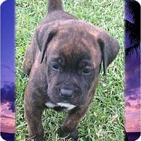 Adopt A Pet :: PUPPIES ❤ DOB 6/03/17! - Brattleboro, VT