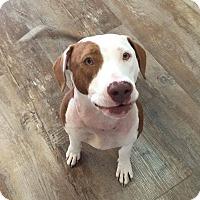 Adopt A Pet :: Summer - Roswell, GA