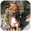 Photo 1 - Retriever (Unknown Type)/Collie Mix Dog for adoption in Long Beach, New York - Ozzy