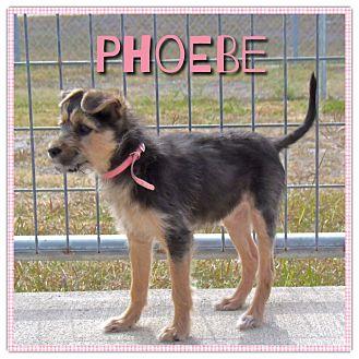 Terrier (Unknown Type, Medium) Mix Puppy for adoption in Corpus Christi, Texas - Pheobe