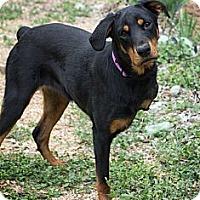 Adopt A Pet :: Hadley - San Antonio, TX