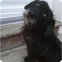 Adopt A Pet :: Mrs. Briar - Fort Hunter, NY