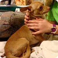 Adopt A Pet :: CAVENDER - Bryan, TX