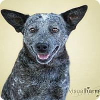 Adopt A Pet :: SALLY - Phoenix, AZ