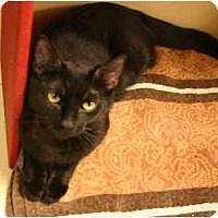 Adopt A Pet :: Sweet Pea - Jenkintown, PA