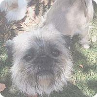 Adopt A Pet :: ZARRA - Salt Lake City, UT