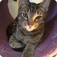 Adopt A Pet :: Dakota - Speonk, NY