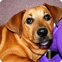 Adopt A Pet :: Baron - Erwin, TN