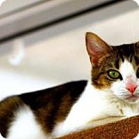 Adopt A Pet :: jessey - Mesa, AZ