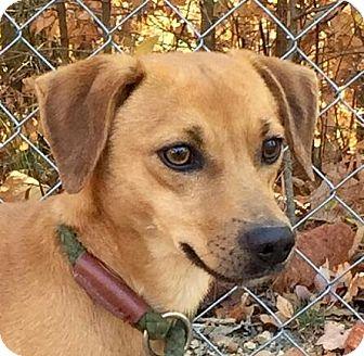 Feist Mix Dog for adoption in Harrisonburg, Virginia - Rabbit
