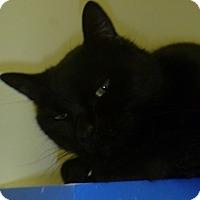 Adopt A Pet :: Paisley - Hamburg, NY