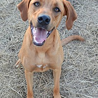 Adopt A Pet :: Sunshine - Saint Clair, MO
