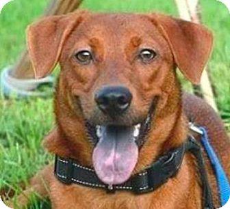 Shepherd (Unknown Type)/Terrier (Unknown Type, Medium) Mix Dog for adoption in San Ramon, California - Zuma