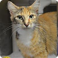 Adopt A Pet :: 10311312 - Brooksville, FL