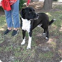 Adopt A Pet :: Laddie - KANNAPOLIS, NC