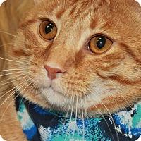 Adopt A Pet :: BOSTON - Clayton, NJ
