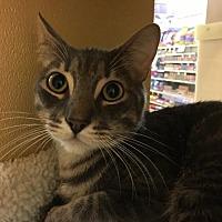 Adopt A Pet :: Smokey - Texarkana, TX