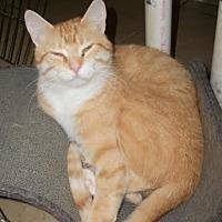 Adopt A Pet :: Princeton - Lacon, IL