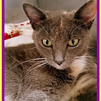 Adopt A Pet :: Lacey - Berkeley Springs, WV