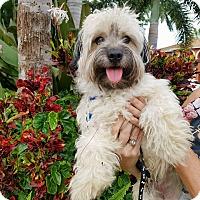 Adopt A Pet :: Theodore - Cape Coral, FL