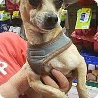 Adopt A Pet :: Bobby - Rosemead, CA