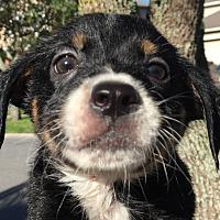 Adopt A Pet :: Faith#3M - Orlando, FL