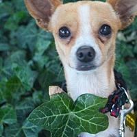 Adopt A Pet :: Sanandreas - Salt Lake City, UT