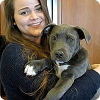 Adopt A Pet :: FLEETWOOD - Ojai, CA