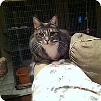Adopt A Pet :: Schatzi - Westlake Village, CA