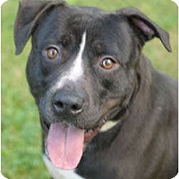 Adopt A Pet :: Stryker - Chicago, IL