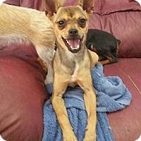 Adopt A Pet :: Feta Cheeze - Houston, TX