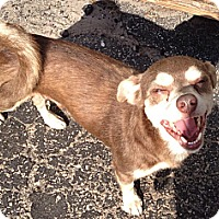 Adopt A Pet :: Ernie - Davie, FL